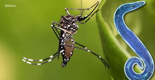 Malaria en Viajeros