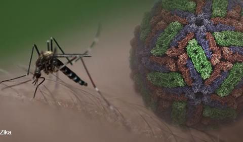Fiebre Zika